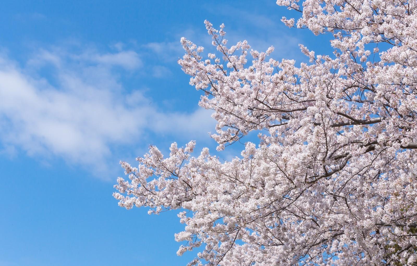 【味噌坐 玉響】【焼ジビエ罠 中目黒】夢屋お花見企画!